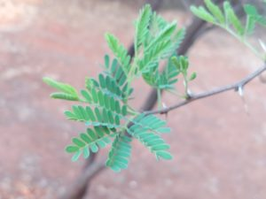 Turn over a new leaf - new leaf new life